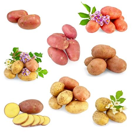 Yellow, pink and red potatoes, white and purple flowers, green leaves isolated on white background photo