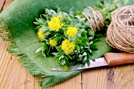 Rhodiola rosea flowers, tied with string, ball of twine, a knife on a green napkin on a background of wooden boards