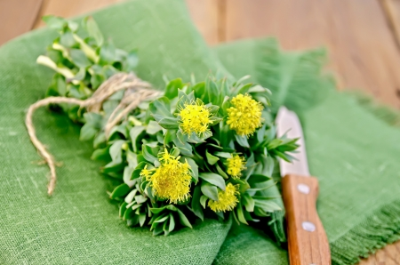 Rhodiola rosea flowers, tied with twine, a knife on a green napkin on a background of wooden boards Standard-Bild