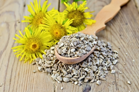expectorant: Wooden spoon with elecampane root, fresh yellow flowers elecampane against a wooden board Stock Photo