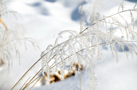 glistening: Hoarfrost on branches of grass  Stock Photo