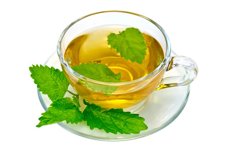 Herbal tea in a glass cup and saucer, a sprig of nettle isolated on a white background