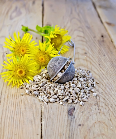expectorant: Metal sieve with elecampane root, fresh yellow flowers Elecampane on wooden boards