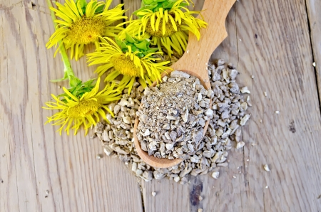 expectorant: Wooden spoon with elecampane root, fresh yellow flowers elecampane against a wooden board on top Stock Photo