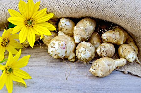 Tubers of Jerusalem artichoke and yellow flowers on burlap background and wooden boards photo