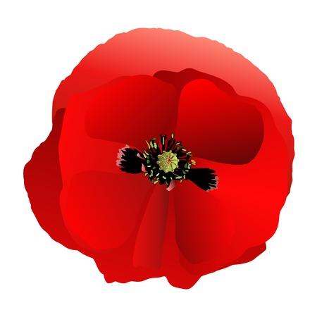 Poppy red gradient Illustration
