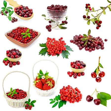 mountain cranberry: A set of photos of strawberries, cranberries, cranberry, cherry, mountain ash, viburnum isolated on a white background Stock Photo