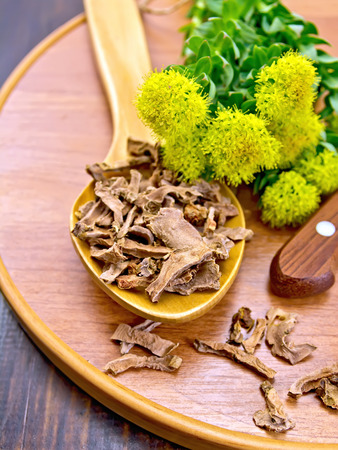 officinal: Spoon with dry roots of Rhodiola rosea, knife, fresh flowers and leaves of Rhodiola rosea on a wooden tray on a dark wooden board