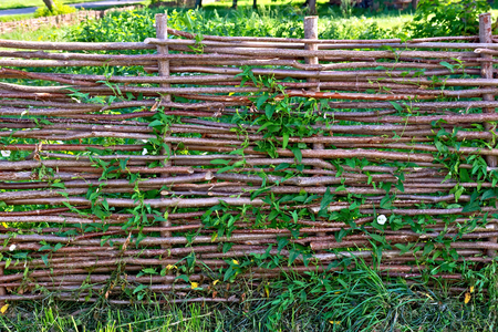 twined: Woven willow fence, twined bindweed against a background of green grass Stock Photo