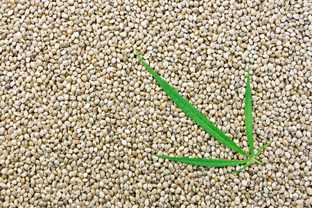 hemp hemp seed: The texture of hemp seed with leaf Stock Photo