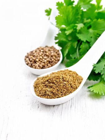 Coriander seeds and ground in two spoons, fresh cilantro on a white wooden board background 免版税图像
