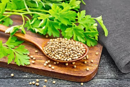 Coriander seeds in a spoon, green fresh cilantro and a napkin on black wooden board background