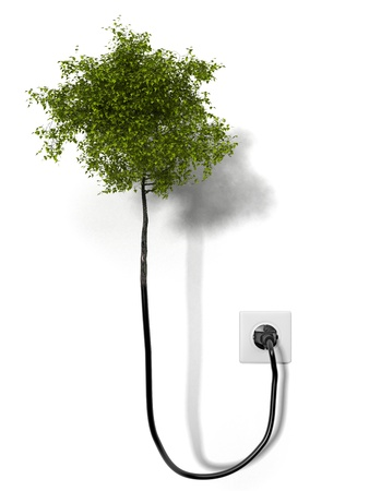 socket: Tree attached to the network