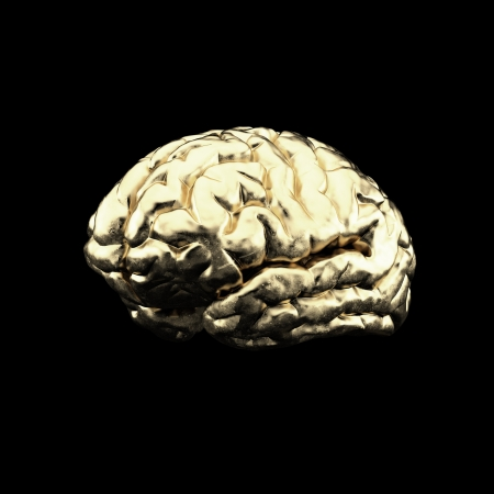 human brain Stock Photo - 17366784