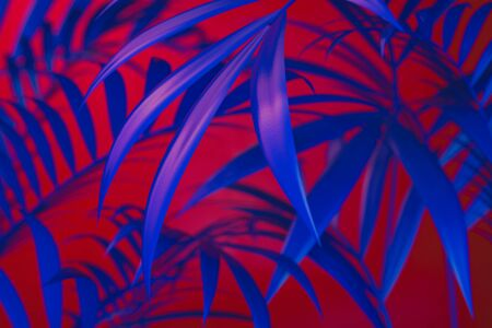 Tropical plants on blue and red neon background. empty space. 3D rendering. 스톡 콘텐츠