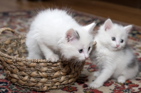 restless: Entertainments of restless kittens Stock Photo