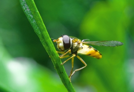 nuisance: Fly on a blade of grass