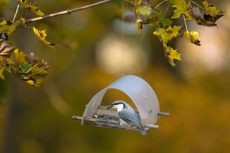 Bird. lunch hour  photo