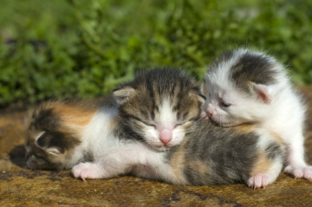 little kittens photo