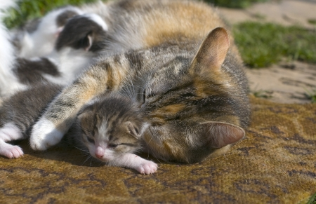 Cat and Kittens photo
