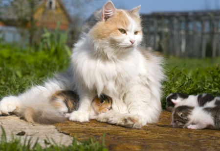 Cat and Kittens Reklamní fotografie - 13611763