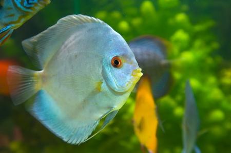 Beautiful colored fish Stock Photo - 19019260