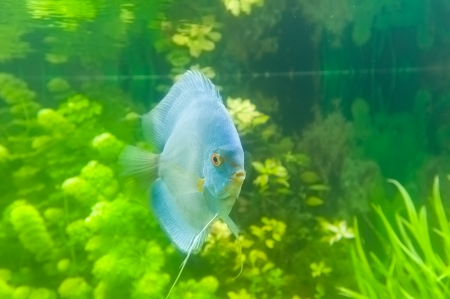 Beautiful colored fish Stock Photo - 19019249