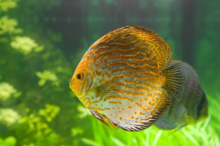 Beautiful colored fish Stock Photo - 19019262