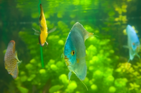 Beautiful colored fish Stock Photo - 19019254