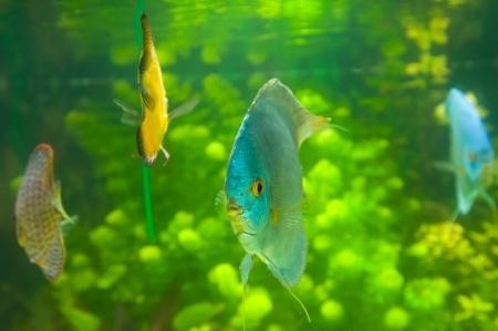 Beautiful colored fish Stock Photo - 19019254