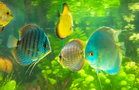 Beautiful colored fish Stock Photo - 19019272