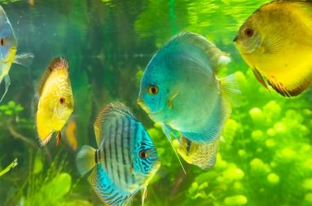 Aquarium fish Stock Photo - 19019256