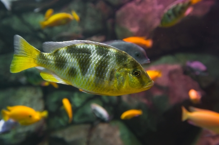 Beautiful colored fish Stock Photo - 19118290