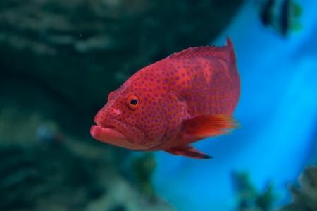 Large predatory fish Stock Photo - 19118274