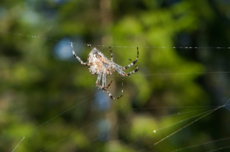 Spider spins its web photo