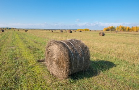 Autumn field in countryside. Haymaking time in Central Russia Stock Photo