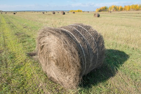 haymaking: Autumn field in countryside. Haymaking time in Central Russia Stock Photo