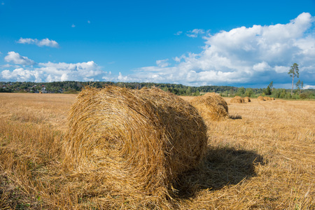 hayroll: Harvested field with straw bales hay-roll in summer