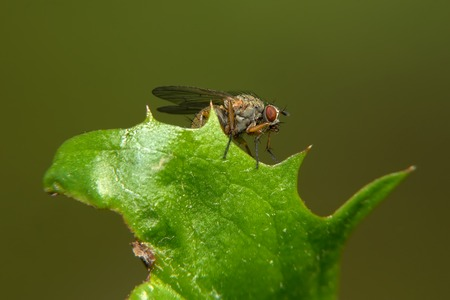 edge: Small fly sits on a green leaf