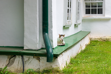 A beautiful cat sits under the window of a village house Editoriali