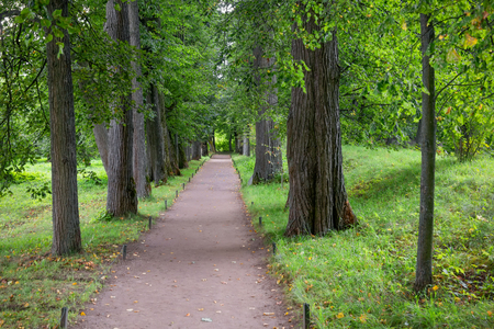 Beautiful avenue of linden trees in the estate of Leo Tolstoy at Yasnaya Polyana, Tula region, Russia Stock Photo