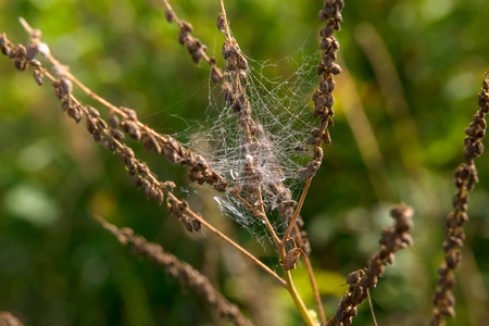 Cobweb on a branch of a plant in the autumn morning