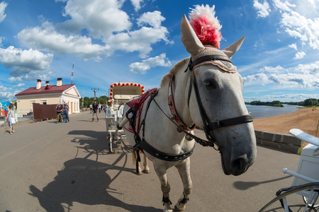 VELIKY NOVGOROD, RUSSIA - AUGUST 14, 2018: Horse harnessed to a carriage for walking around the city in Veliky Novgorod, Russia.