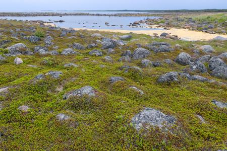 Muksalma Island. Solovetsky archipelago, White Sea Coast, Russia Reklamní fotografie - 122279847