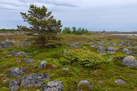 Muksalma Island. Solovetsky archipelago, White Sea Coast, Russia Reklamní fotografie - 122279844