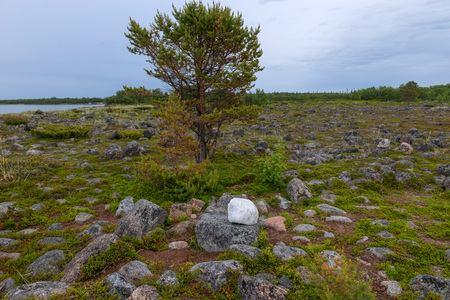 Large quartz boulder in the tundra on the shore of the White Sea Reklamní fotografie