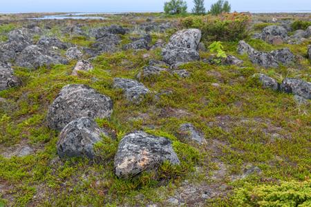 Muksalma Island. Solovetsky archipelago, White Sea Coast, Russia Reklamní fotografie - 122279853