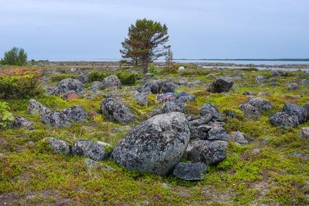 Muksalma Island. Solovetsky archipelago, White Sea Coast, Russia Reklamní fotografie - 122279949