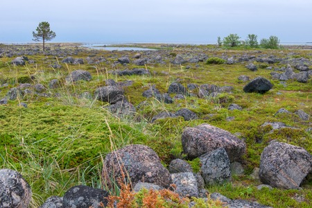 Muksalma Island. Solovetsky archipelago, White Sea Coast, Russia Reklamní fotografie - 122279948