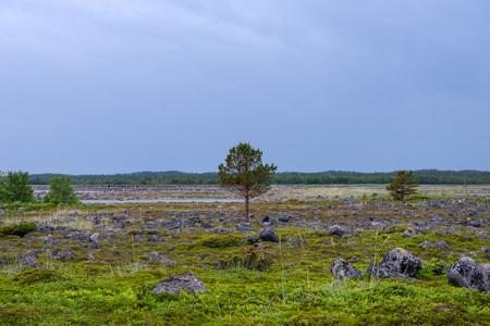 Muksalma Island. Solovetsky archipelago, White Sea Coast, Russia Reklamní fotografie - 122279953